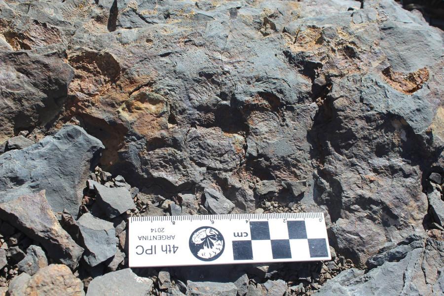 Moldes fósiles